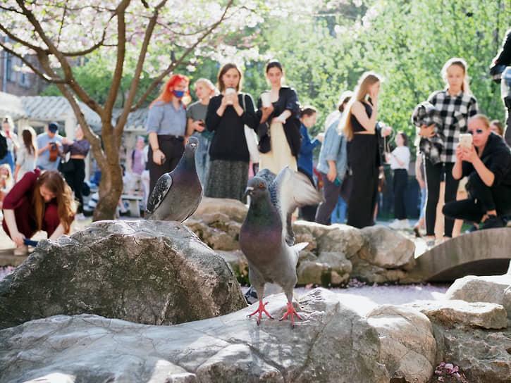 Санкт-Петербург. Посетители «Сада дружбы» фотографируют цветущую сакуру
