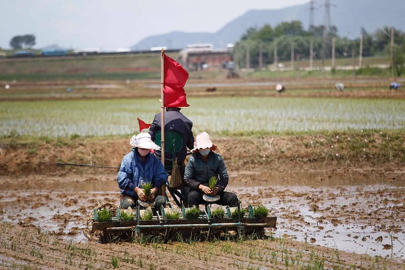 Пхеньян, КНДР. Фермеры за работой