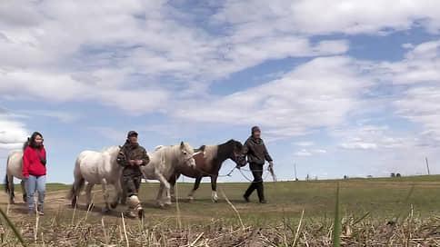 Кони-люди на пути в Европу