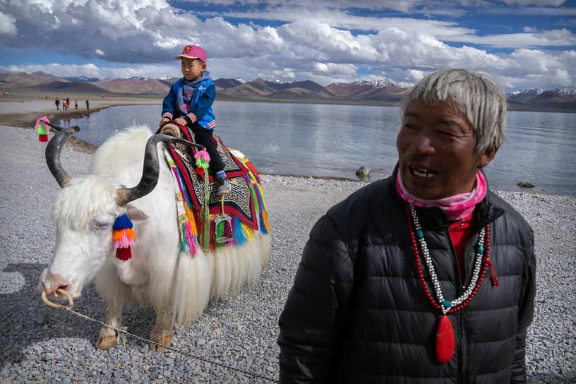 Озеро Намцо, Тибетский автономный район, Китай. Турист позирует для фото на белом яке