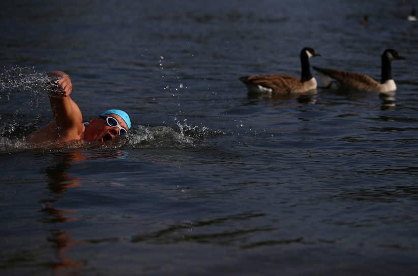 Лондон, Великобритания. Мужчина плывет по озеру в Гайд-парке