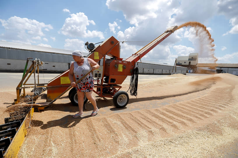 Радуга, Россия. Работница загружает пшеницу в Ставропольском крае