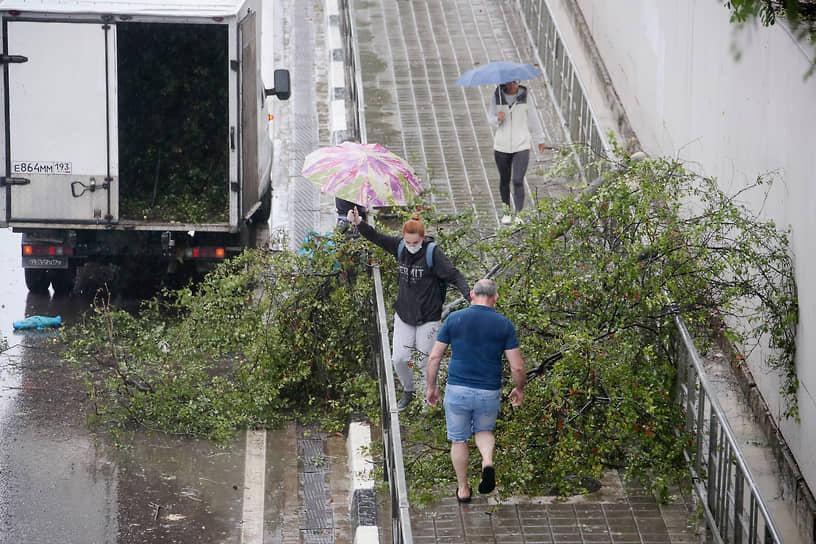 В Сочи повалило несколько десятков деревьев