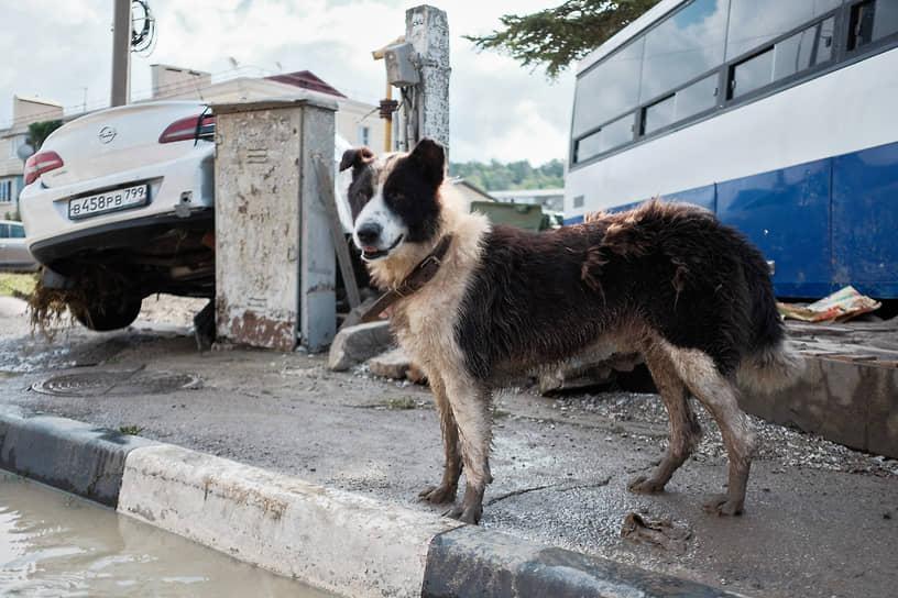 Последствия наводнения в Джубге