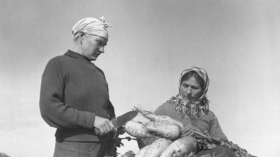 Колхозницы колхоза «Новый сахалин» на сборе урожая корнеплодов