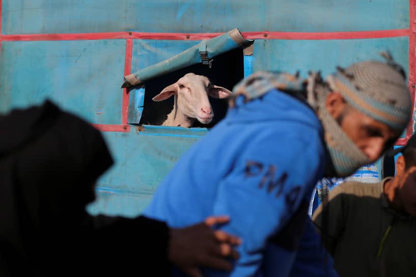 Хан-Юнис, сектор Газа. Палестинцы делают покупки на рынке в преддверии Курбан-байрама