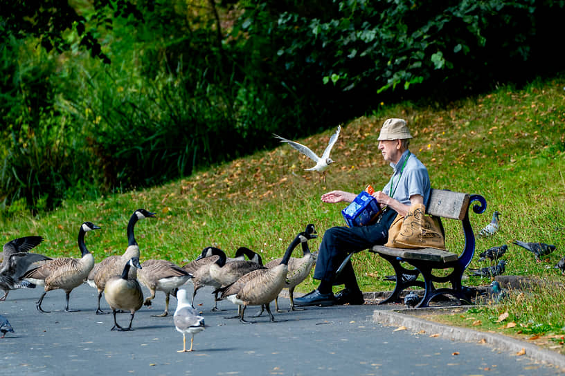 Ливерпуль, Великобритания. Мужчина кормит птиц в парке