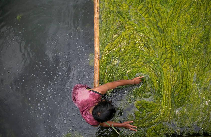 Катманду, Непал. Рабочий очищает водоросли в пруду Камаль Покхари