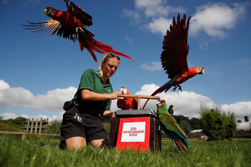 Данстейбл, Великобритания. Сотрудница зоопарка взвешивает попугаев