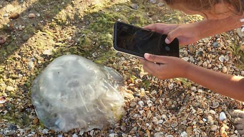 Медузий десант