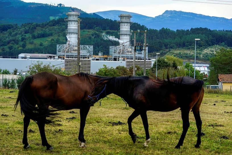 Аморебьете, Испания. Лошади в поле на фоне газотурбинной электростанции