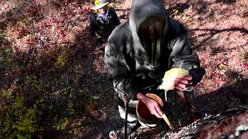 Старые веревки и почерневший дымарь // Как башкирский пасечник сохраняет древнюю традицию сбора меда
