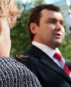 Свое ходатайство об аресте мэра Архангельска Александра Донского прокуратура построила на тех же доводах, которые ранее уже признавались судьей Казариной «неубедительными». Загружается с сайта Ъ
