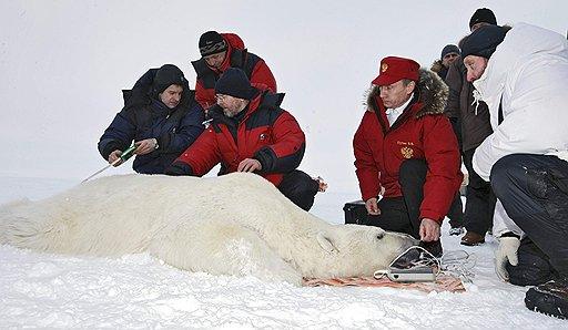 Медведь и Путин
