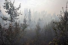 Городской округ Электрогорск. Сильное задымление, возникшее в результате горения торфа