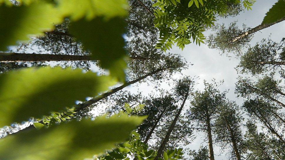 Почему основам лесной госполитики РФ не хватает конкретики