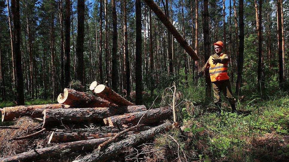 Как Минприроды добилось отмены реформы финансирования лесоохраны