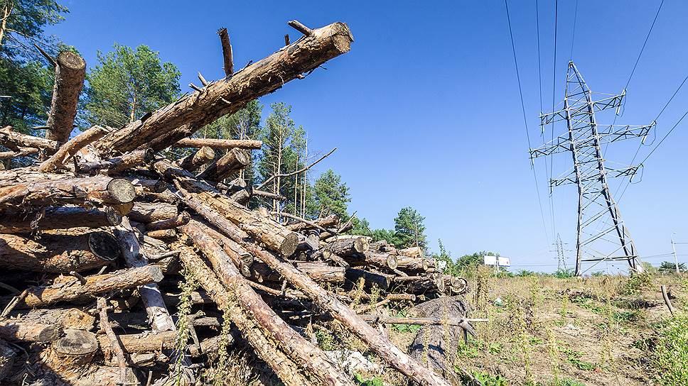 Как в Госдуме предложили приватизировать леса
