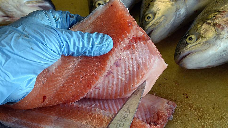 Рыбу загоняют на родные берега