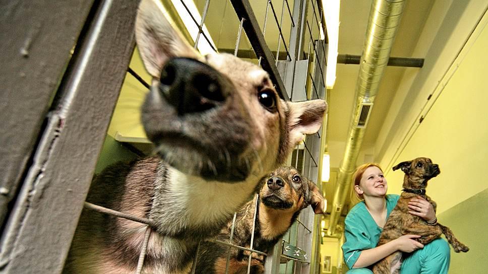Как защитники животных требовали скорректировать законодательство