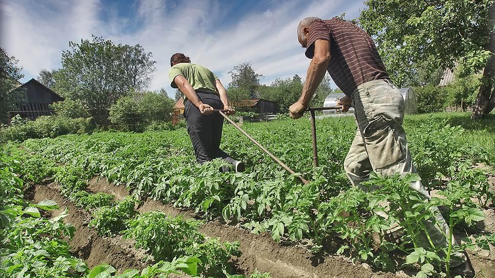 Безработице противостоят ремонт, огороды и неформальная занятость