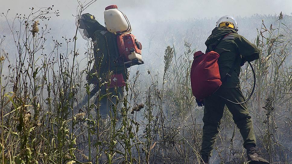 Почему волонтеры «Гринписа», подвергшиеся нападению на Кубани, заинтересовали полицию Адыгеи
