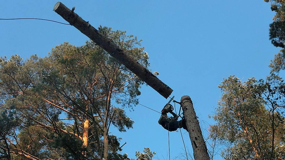 Защитники московских парков потребовали добиться запрета на вырубку деревьев