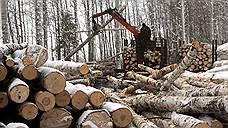 В лесу раздавался отпор дровосекам