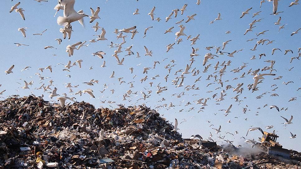 Почему экологи выступили против строительства мусоросжигательных заводов
