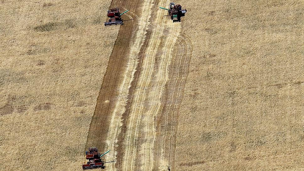 Почему российскому рынку зерна грозит затоваривание