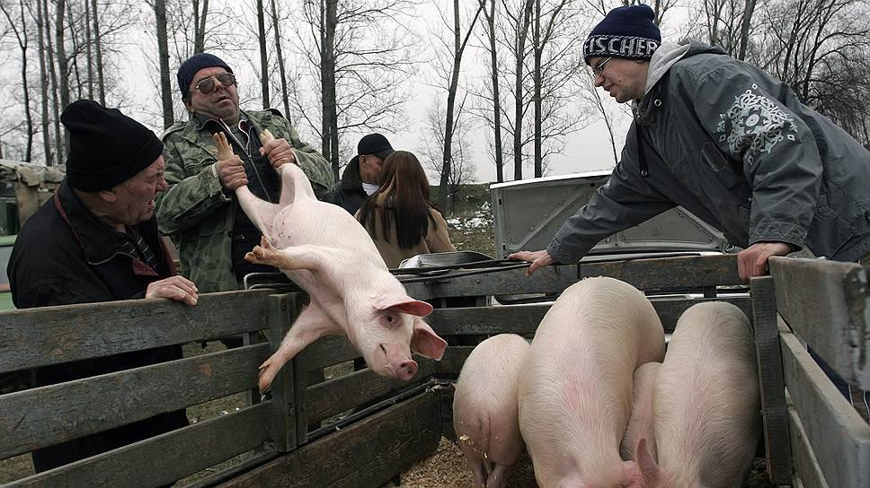 Как российский запрет на импорт свинины признан дискриминирующим