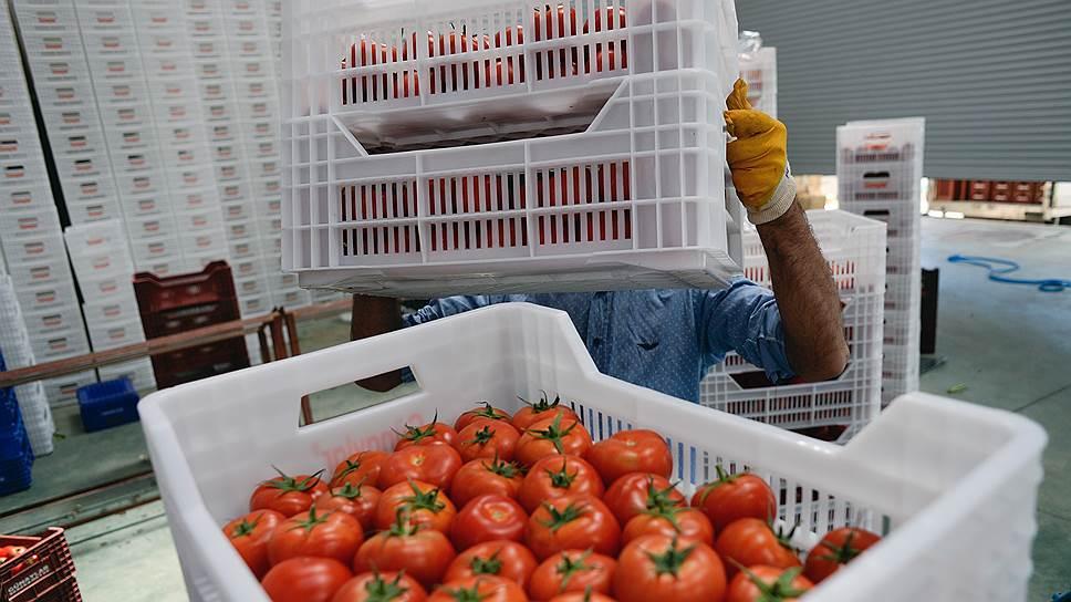 """""""Ъ"""" стала известна новая схема закупки запрещенных в России турецких томатов"""