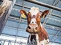 Вадим Мошкович попробует сыр // Основатель «Русагро» вошел в молочный проект Алексея Богачева