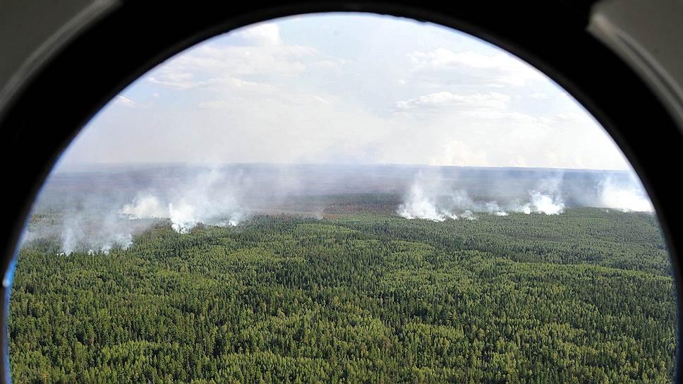 Какая площадь лесных пожаров на территории России