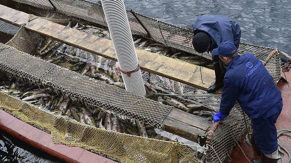Балансовая прибыль российской рыбной отрасли в первом полугодии 2017 года сократилась на 18,7%