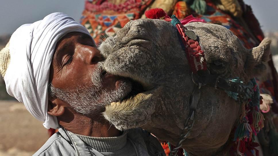 Российские путешественники освоили самостоятельные поездки в Египет