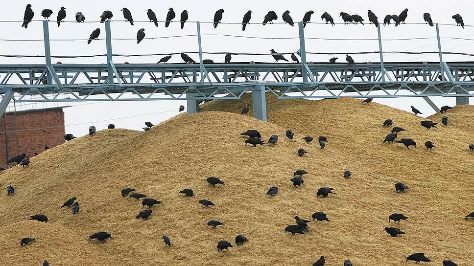 Минсельхоз приказал частным компаниям спасать урожай