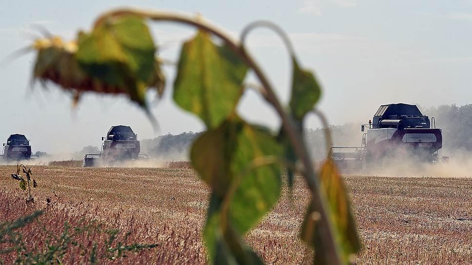 Как рекордный сбор зерна привел к коллапсу
