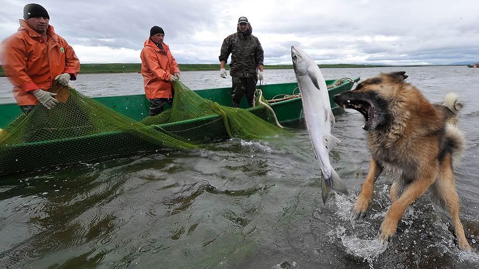 Как власти хотят изменить правила вылова рыбы