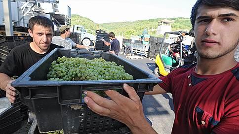 «Абрау-Дюрсо» заготавливает почву // Компания увеличила в 1,5 раза площадь земель под виноградники