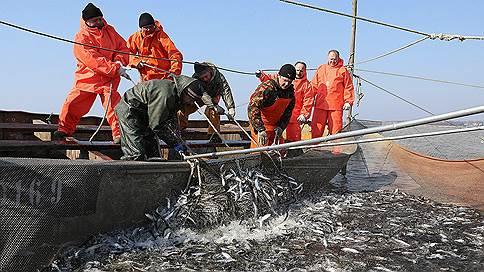 Рыба ушла из-под судов // Заявки на инвестиционные квоты на вылов минтая и сельди не будут принимать в этом году