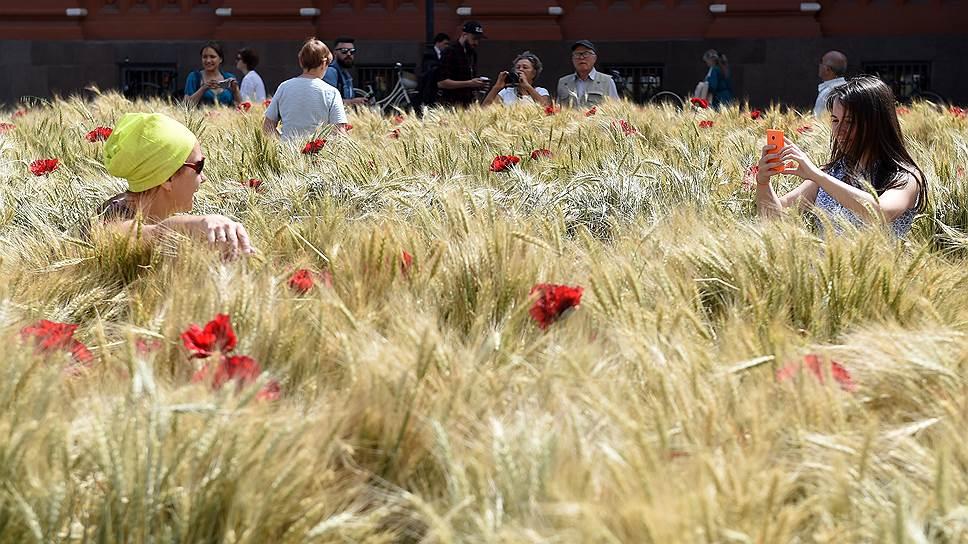 Как пшеница выедет на низком рубле