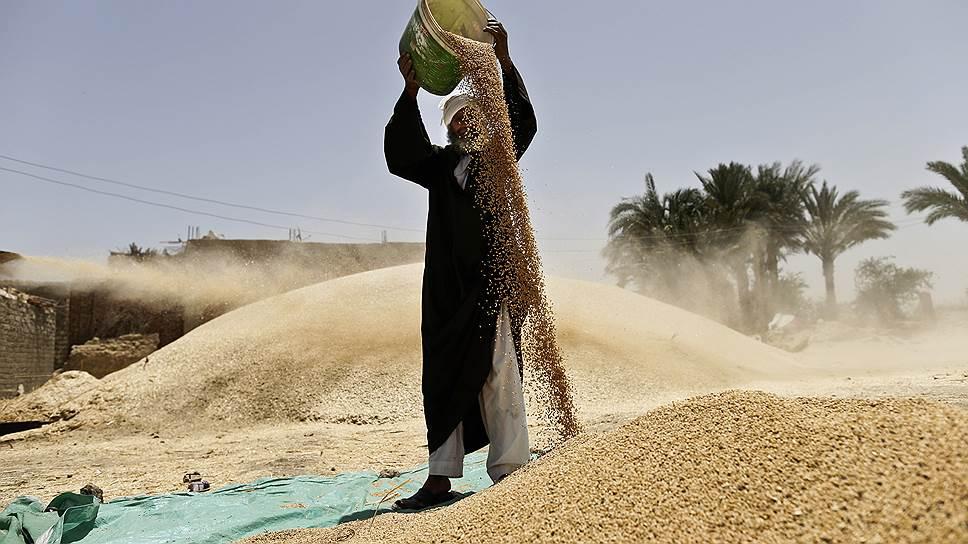 Почему у Египта возникли претензии к российской пшенице
