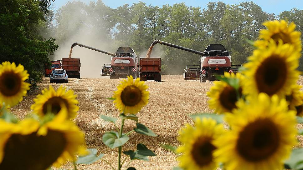 Насколько сухая погода угрожает российским урожаям