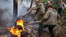 В лесах, которые давно не горели, скопилось больше «горючего»