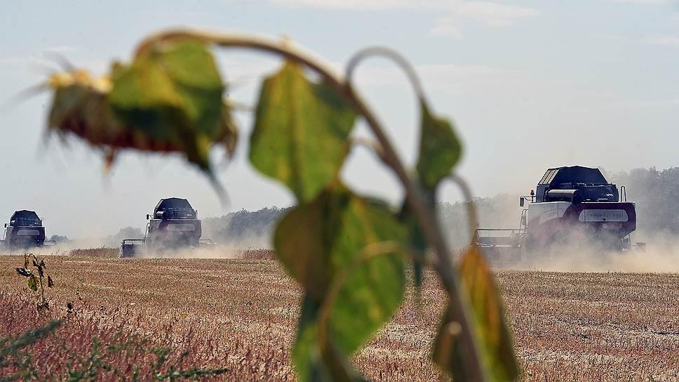 Экспорт пшеницы в августе обновил рекорд