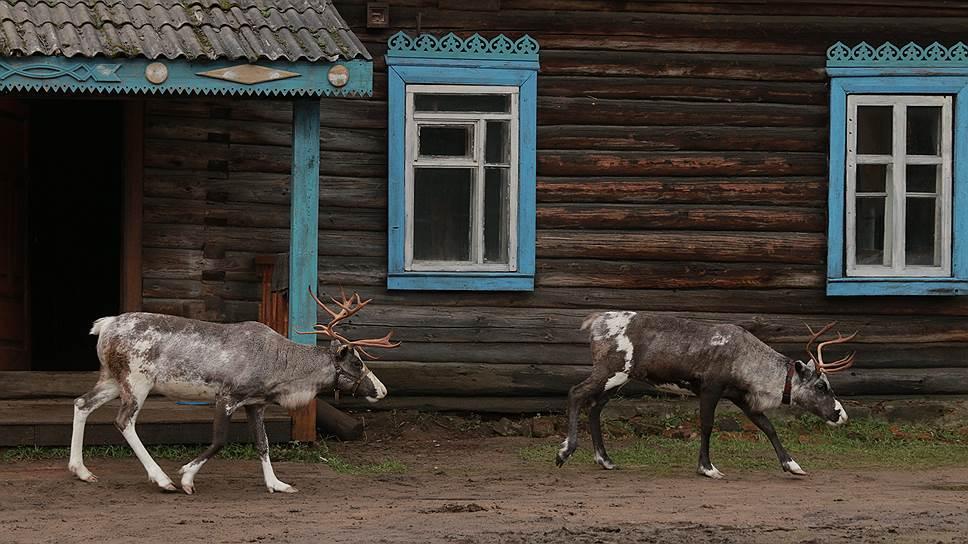Животные на экране заметно потеснили людей, давая им урок естественного поведения перед камерой