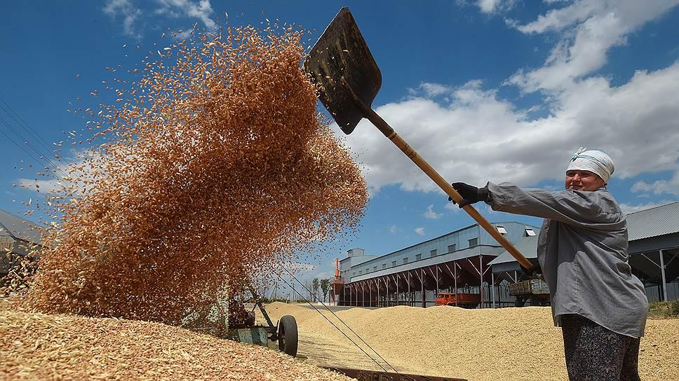 Как сказались слухи об ограничении экспорта зерна на внутреннем рынке России