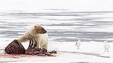 Арктику отправили на Дальний Восток