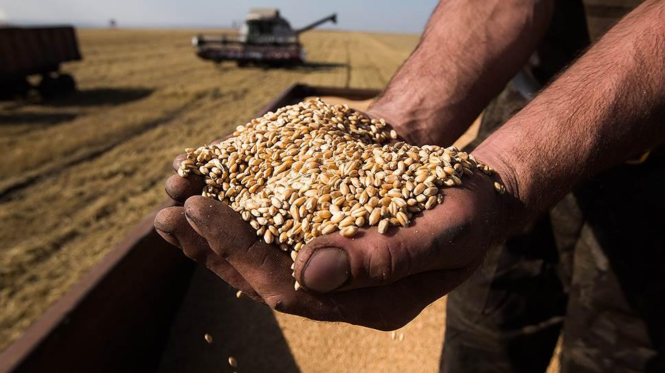 Цена на пшеницу в ростове на элеваторах элеватор город татарск